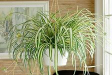 Air Cleaning Houseplants - South Africa