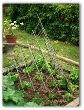 backyard vegetable gardens online - Backyard Vegetable Garden