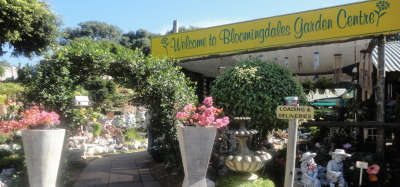 Plant Nursery - Durban North - Bloomingdales Garden Centre
