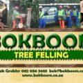 Bok Boom Tree Felling - Benoni