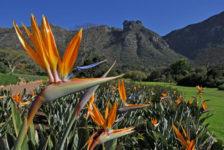 National Botanical Gardens - South Africa - Kirstenbosch