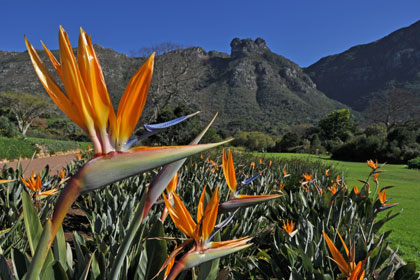 National Botanical Gardens   South Africa   Kirstenbosch