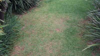 Care For Grass In Winter (2)