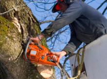 Expert Tree Felling - Randburg