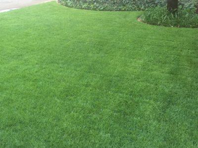 GingerGreen Evergreen Lawn - Garden Route