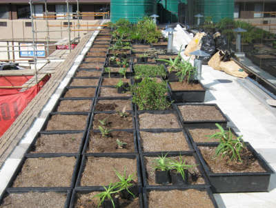 Green Roof Modules - South Africa - Green Roof Designs