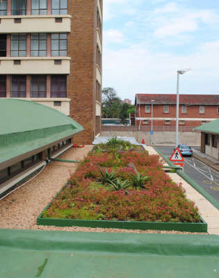 Rooftop Gardens - South Africa - Green Roof Designs