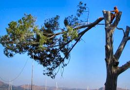 Tree Felling - Centurion - Greensquare