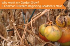 Gardening Tips - Boksburg - Hecker Nursery