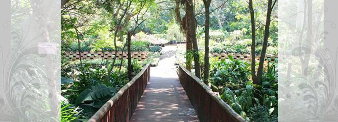 Illovo Plant Nursery - KwaZulu-Natal