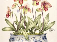 Kelly Higgs Botanical Art Exhibition 2017 - Johannesburg