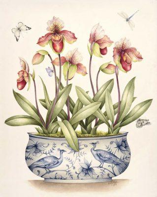 Kelly Higgs Botanical Art Exhibition 2017 - Johannesburg