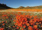 Namaqualand Private Spring Flower Tour 2017 - Cape Region