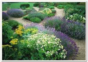 Country Garden Landscaping - Cape Town - Natures Blueprint