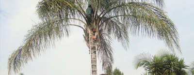 Professional Tree Fellers - Johannesburg - Tree Felling