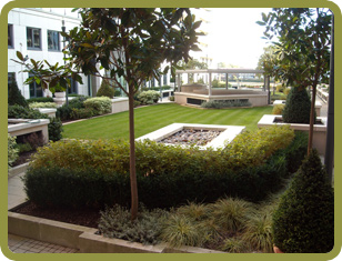Landscaping - Cape Town - Silvertree Landscapes