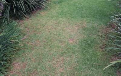 Care for Grass in Winter