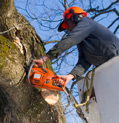 Expert Tree Felling