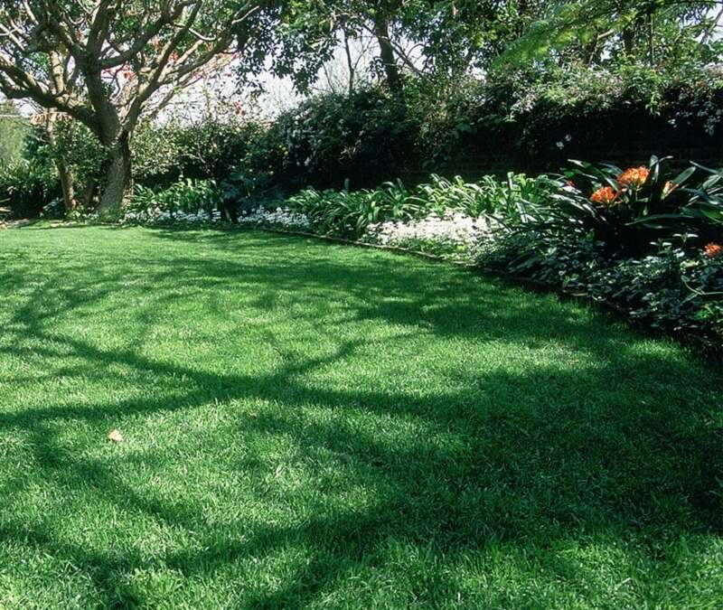 Gift Lawns Instant Lawn