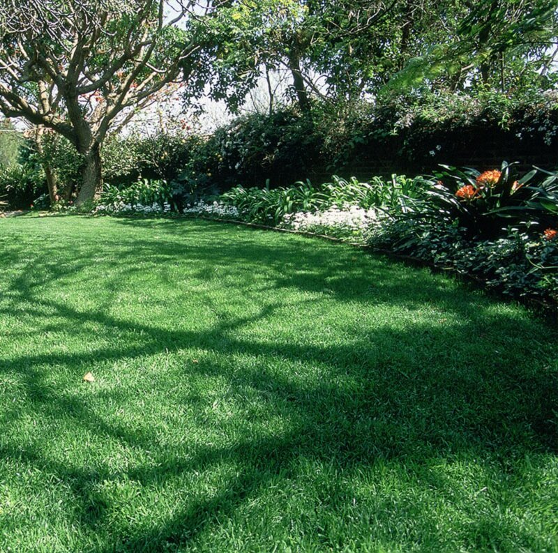 Gift Lawns Instant Lawn - Shade Over Grass - Roodepoort