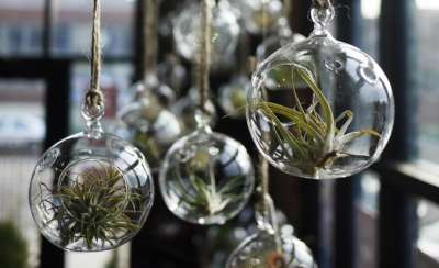 Home and Garden Air Plants