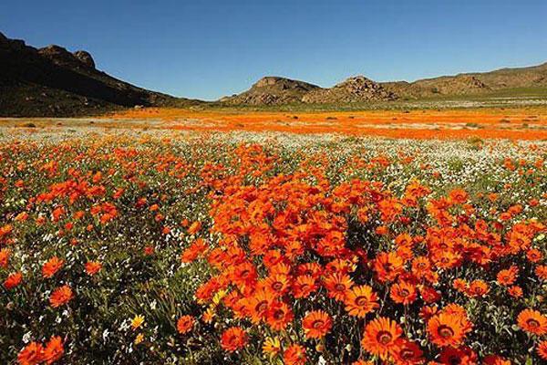 Namaqualand Private Spring Flower Tour 2017
