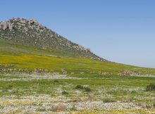 National Parks Spring Flower Hikes - Northern Cape