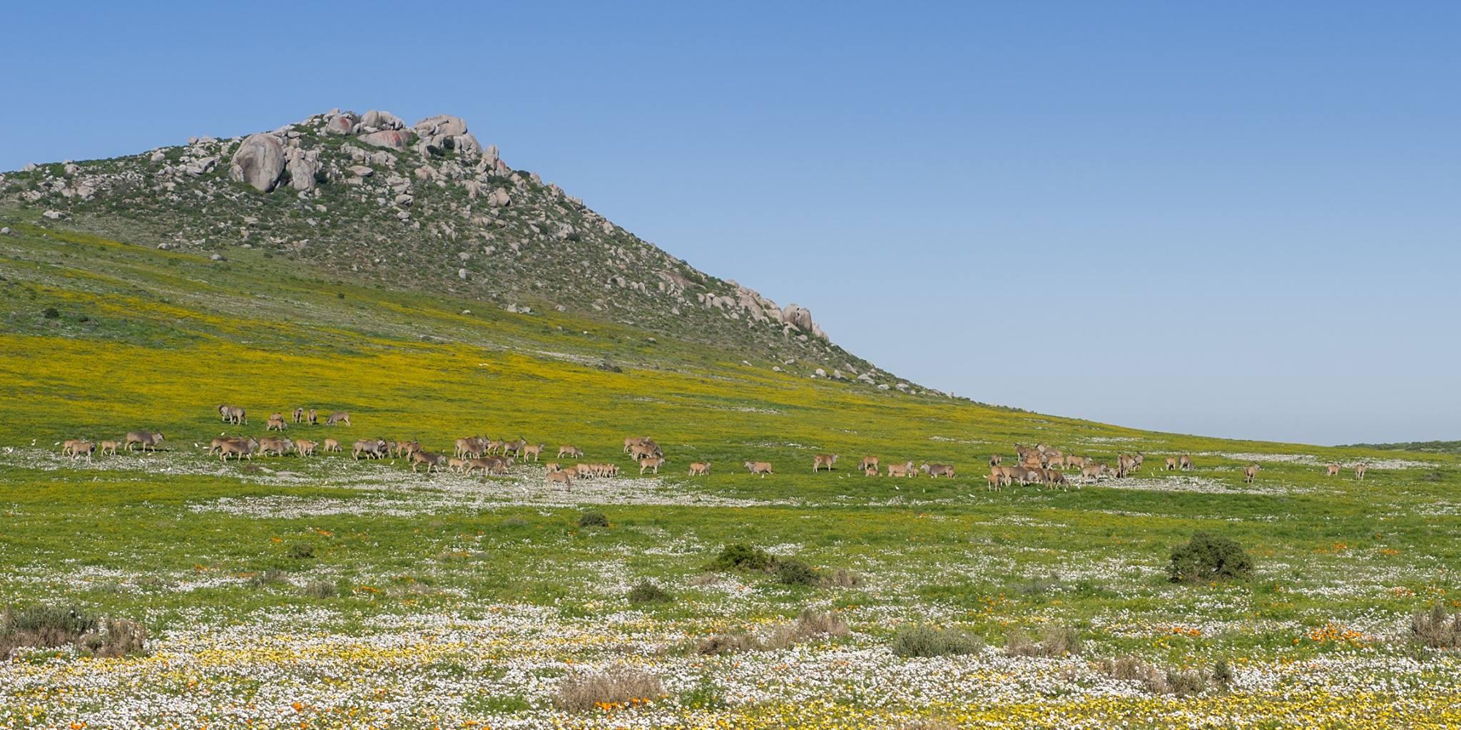 National Parks Spring Flower Hikes