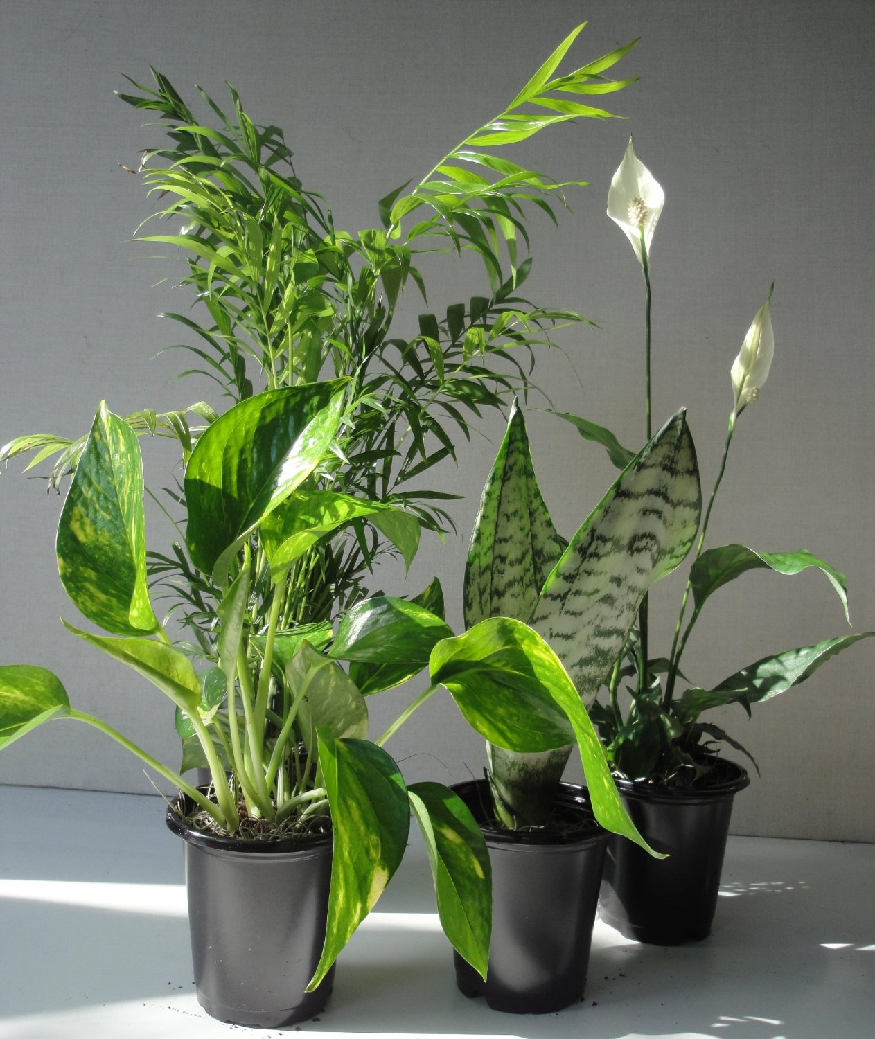 Popular Bedroom Plants - South Africa