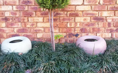 Popular Groundcovers South Africa