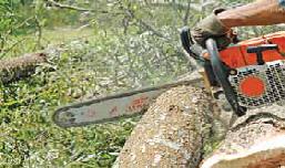 Shahumba Tree Felling