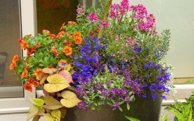 Summer Garden Tips