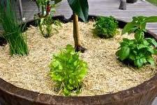 Waterwise Herb Garden