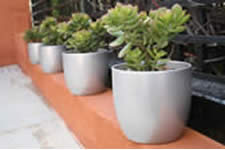 Waterwise Succulents